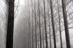 Regain de l'hiver Photographie stock libre de droits