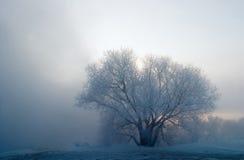 Regain de matin Photo stock