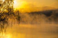 Regain de matin autour du lac élevez le bouleau Image stock