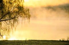Regain de matin autour du lac élevez le bouleau Photos stock