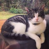 Regal Cat Stock Image