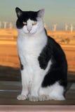 The Regal Tuxedo Royalty Free Stock Photo