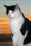 Regal Tuxedo Stock Photos