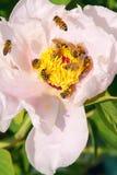 Regalement de la primavera Fotografía de archivo libre de regalías