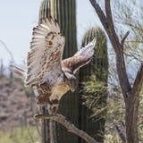 Regalis ferruginosos de Hawk Buteo Foto de archivo libre de regalías