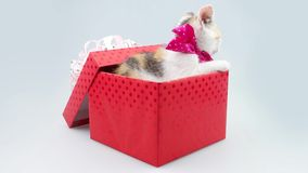 Regalo de cumpleaños Pequeño gatito con el arco púrpura en la actual caja metrajes