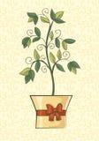 Regalo de la flor en un pote Imagen de archivo