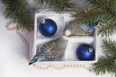 Regalo de la Navidad, pequeño pájaro dos Fotos de archivo