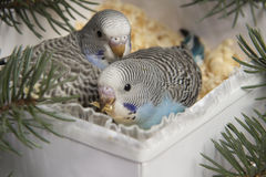 Regalo de la Navidad, pequeño pájaro dos Foto de archivo