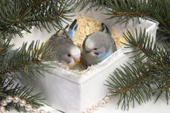Regalo de la Navidad, pequeño pájaro dos Fotografía de archivo libre de regalías