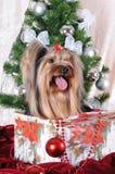 Regalo de Navidad bajo el árbol - perrito Fotos de archivo