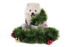 Regalo de Navidad del perrito Fotografía de archivo