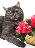 Regalo de un gato foto de archivo libre de regalías