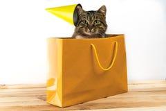 Regalo del gato el gato se sienta en el paquete foto de archivo libre de regalías