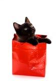 Regalo del gattino Fotografie Stock Libere da Diritti