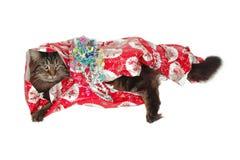 Regalo del gatto di Natale Fotografia Stock