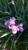 Regalo del iris Fotos de archivo