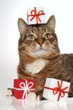 Regalo y gato Fotografía de archivo