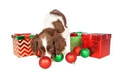 Regalos de Navidad y ornamentos juguetones del perrito Fotos de archivo