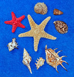 Regalos del mar Imagenes de archivo