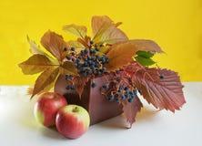 Regalos del otoño Imágenes de archivo libres de regalías