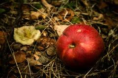 Regalos del otoño Foto de archivo