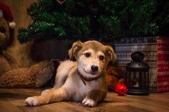 Regalos que esperan del perro del ` s del Año Nuevo para fotografía de archivo libre de regalías