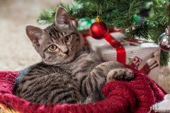 Regalos y gatito de la Navidad debajo del árbol Foto de archivo libre de regalías