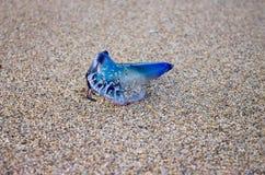 Regalskepp på sanden Royaltyfri Fotografi