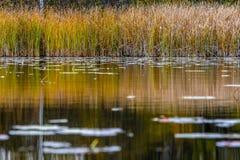 Regard à travers un étang Photos stock