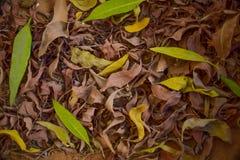Regard étroit de texture de feuille de nature Image libre de droits
