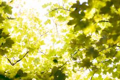 Regard au ciel par des feuilles Images libres de droits