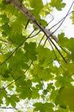 Regard au ciel par des feuilles Image libre de droits