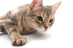 regard concerné par chat très image stock
