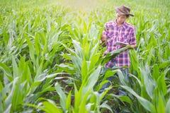 Regard d'agriculteurs aux usines de maïs heureusement image stock