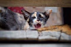 Regard d'animal de compagnie de chat Images libres de droits