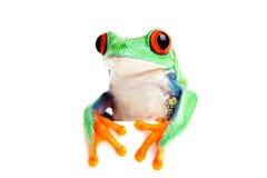 Regard d'isolement par grenouille au-dessus du bord Image stock