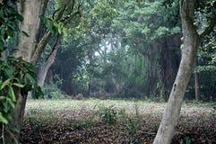 Regard dans les bois Photographie stock