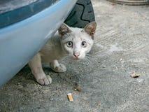 Regard de chat à moi, alerte de visage, images libres de droits