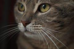 regard de chat Photo stock