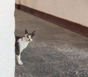 Regard de chat au coin de la rue Photo libre de droits