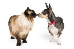 Regard de chat et de chien et nez émouvants Photographie stock