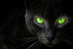 Regard de chat noir dans une lentille. Photo stock