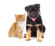 Regard de chaton et de chiot Photos libres de droits