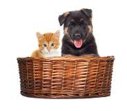 Regard de chaton et de chiot Photo stock