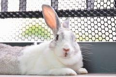 Regard de lapin Image libre de droits