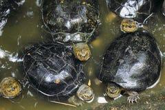 Regard de tortue Image libre de droits