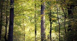 Regard de vintage de belle forêt photo libre de droits