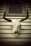 Regard de vintage de crâne de vache Images libres de droits