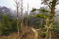 Regard en bas des arbres Images stock